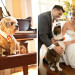 Dog as Bridal Party Member at Palm Beach Zoo in Palm Beach, FL thumbnail