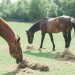 Horses at Romantic Mint and Serenity Blue Farm Wedding at Private Residence in Milwaukee, WI thumbnail