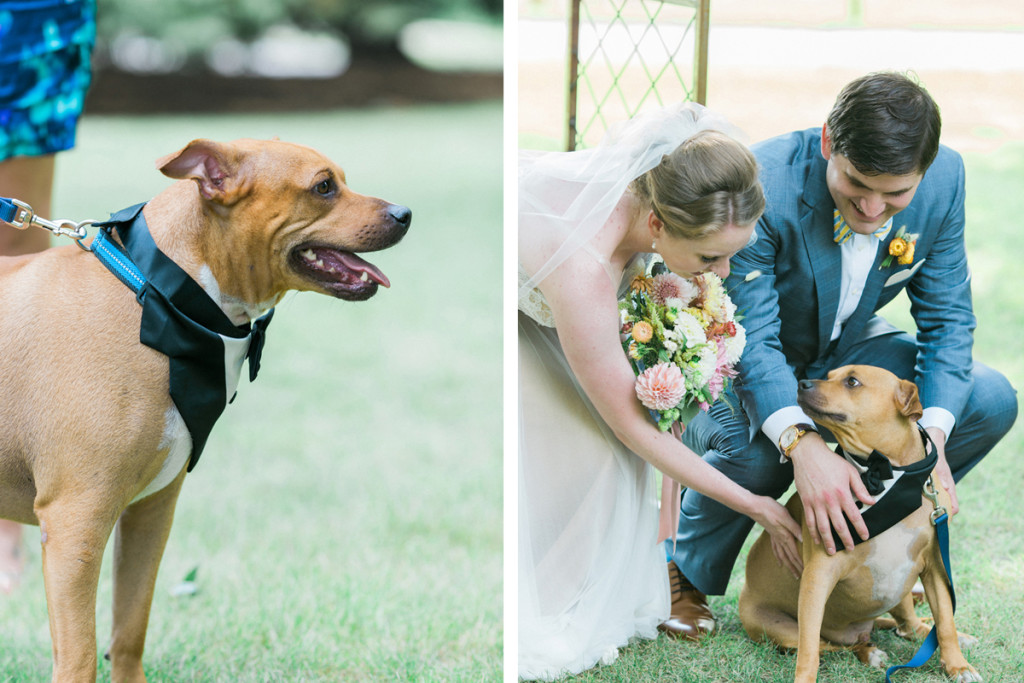 Ring Bearer Dog at Romantic Mint and Serenity Blue Farm Wedding | The Majestic Vision Wedding Planning | Private Residence in Milwaukee, WI | www.themajesticvision.com | Elizabeth Haase Photography
