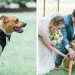 Ring Bearer Dog at Romantic Mint and Serenity Blue Farm Wedding at Private Residence in Milwaukee, WI thumbnail
